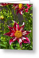 Christmas Star Dahlia And Bee Greeting Card
