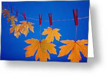 Close-up Of Fall Colored Maple Leaves Greeting Card