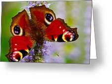 Closeup Of An European Peacock Butterfly Greeting Card