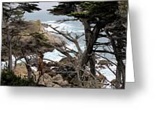 Coast Of California Greeting Card