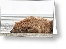 Coastal Brown Bear Picture  Greeting Card
