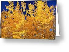 Colorado Autumn Greeting Card
