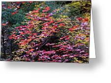Colorful Leaves On A Tree Greeting Card
