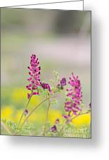 Common Fumitory Greeting Card