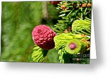 Cone Top Greeting Card