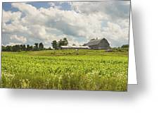 Corn Growing In Maine Farm Field Greeting Card