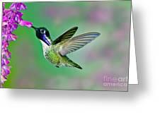 Costas Hummingbird Greeting Card
