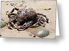 Crab Beach Greeting Card