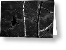 Crow Behind The Trees Greeting Card