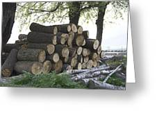 Cut Tree Trunks Piled Up For Further Processing After Logging Greeting Card