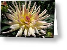 Dahlia Named Camano Ariel Greeting Card