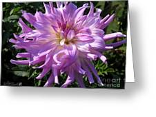 Dahlia Named Mingus Randy Greeting Card