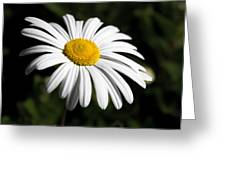 Daisy In The Garden Greeting Card