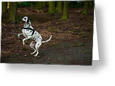 Dalmatian 5 Greeting Card