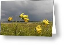 Dancing Before The Storm Greeting Card