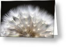 Dandelion Backlit Close Up Greeting Card