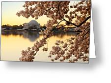 Dawn Over The Jefferson Memorial  Greeting Card