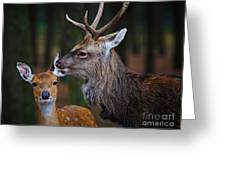 Deer Love Greeting Card