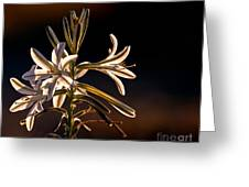 Desert Easter Lily Greeting Card by Robert Bales