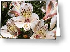 Desert Willow Greeting Card