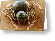 Dictynid Spider Greeting Card by David M. Phillips