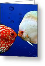 Discus Fish Greeting Card