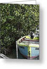Docked By The Mangrove Trees Greeting Card