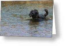 Dog Ball Water Greeting Card