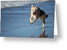 Dog On Beach Greeting Card