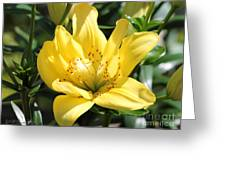 Double Asiatic Lily Named Fata Morgana Greeting Card