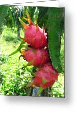 Dragon Fruit Tree Greeting Card