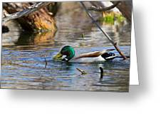 Ducktails Greeting Card