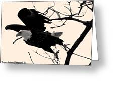 Eagles Along The Mississippi Greeting Card