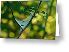 Early Fall Net Greeting Card