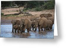 Elephants Crossing The River Greeting Card
