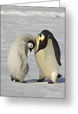Emperor Penguins Greeting Card