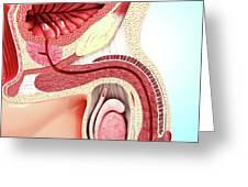 Enlarged Prostate Greeting Card