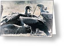 Eurasian Griffon Vulture Gyps Fulvus Greeting Card