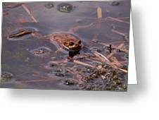European Common Brown Frog Greeting Card
