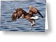 European Fishing Sea Eagle 4 Greeting Card