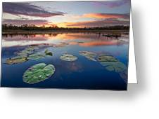 Everglades At Sunset Greeting Card
