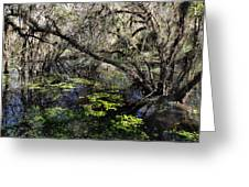 Buttonwood Swamp Greeting Card