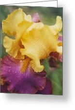 Exotic Iris Greeting Card