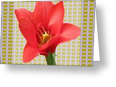 Exotic Red Tulip In Bold And Two Border Patterns Tiny Sparkle Parallal Horizontal Strips Summer Flow Greeting Card