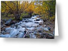 Fall At Big Pine Creek Greeting Card by Cat Connor