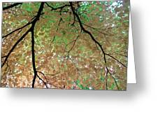 Fall Tree Greeting Card