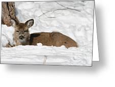 Fawn In The Snow Greeting Card