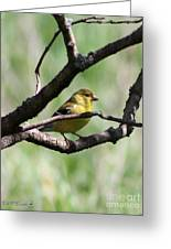 Female American Goldfinch Greeting Card