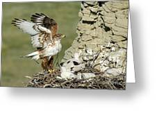 Ferruginous Hawk And Chicks Greeting Card