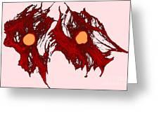 Fibroblasts, Lm Greeting Card
